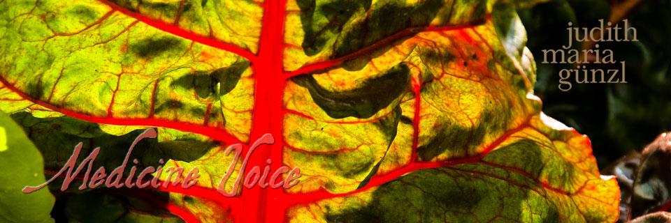 Medicine Voice Mangold
